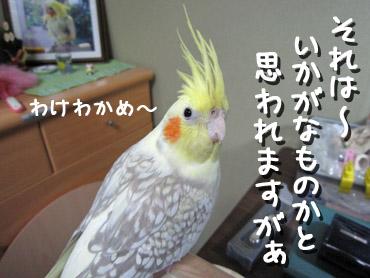 091215_4