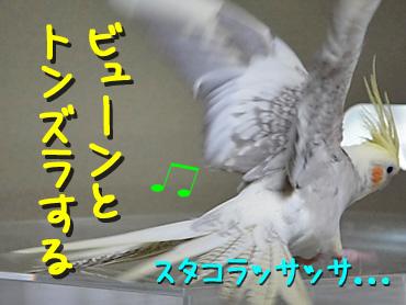 100505_9