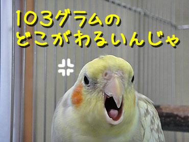 100626_5