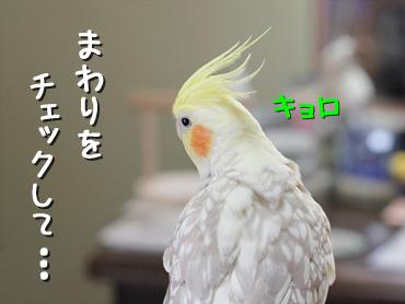 120308_1