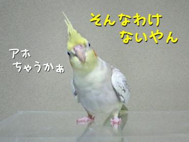 121226_5
