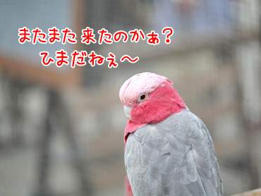140821_1