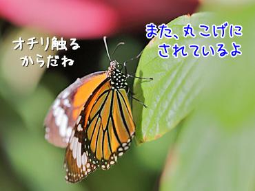 141101_7