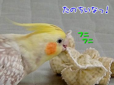 141102_7