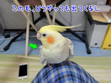 151108_2